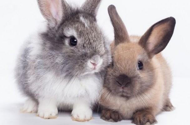 Quelle race de lapin choisir la gazette d 39 animal valley - Animal mignon ...