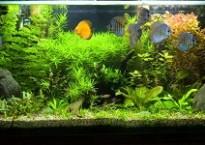 Bon éclairage d'aquarium