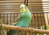 batterie d'élevage pour oiseaux